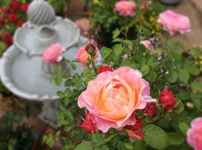 Garden02_2