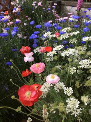 Garden03_3