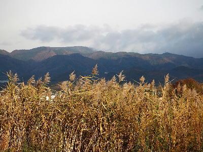 Karesusuki