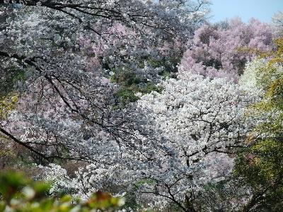 Hanamiyama201101