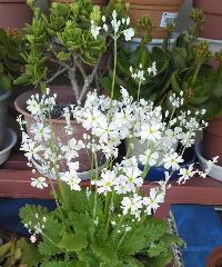 Flower201503